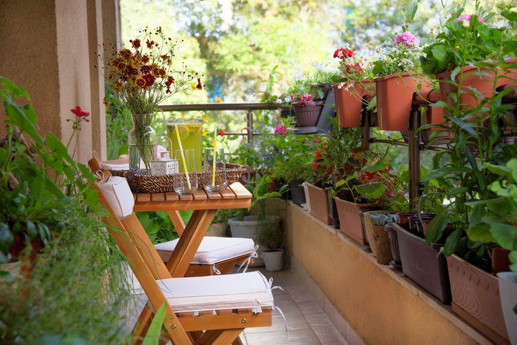 Ilustrasi balkon rumah yang dihiasi beragam tanaman hias.