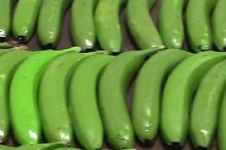 Pisang-pisang palsu yang dipakai untuk menyelundupkan kokain.
