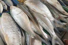 Mahasiswa UNS Manfaatkan Tulang Ikan Bandeng Jadi Bahan Gelatin