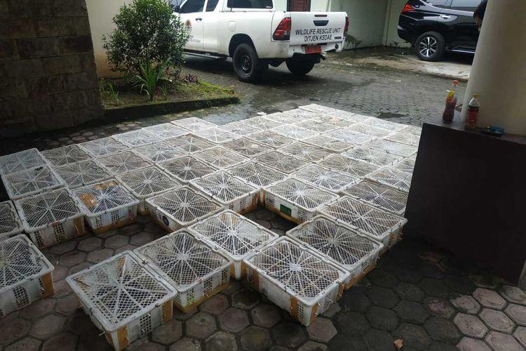 Sebanyak 1.700 ekor burung ciblek/perenjak Jawa dan 600 ekor burung gelatik batu, yang akandiselundupkan ke Yogyakarta diamankan petugas di Bandara Internasional Kualanamu pada Senin (15/6/2020). Pengiriman ribuan burung tersebut tanpa disertai dokumen resmi.