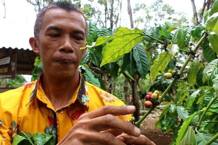 Salah satu Petani Kopi Kelompok Tani Kopi Ratu Asih menunjukan biji kopi merah di area perkebunan kopi, Selasa (10/12/2019). Desa Cibeureum Kecamatan Cilimus Kabupaten Kuningan mampu menghasilkan lebih dari 40 ton biji kopi dari total luas area 35 – 40 hektar, atau 1 ton per 1 hektar.