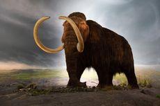 Bangkitkan Spesies dari Kepunahan, Bagaimana Potensi dan Urgensinya?
