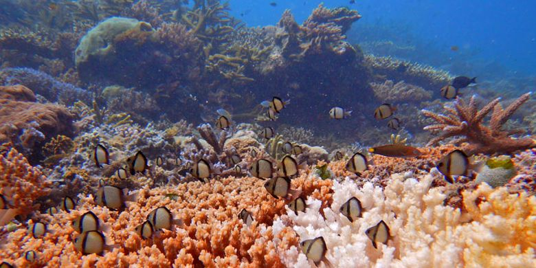 Suasana bawah laut di Pulau Atauro, Timor Leste.