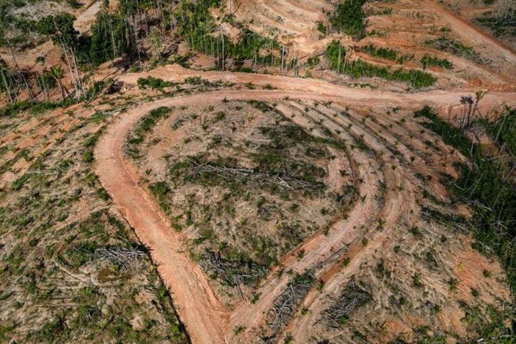 Hutan primer Papua kini mulai beralih fungsi menjadi kebun kelapa sawit.