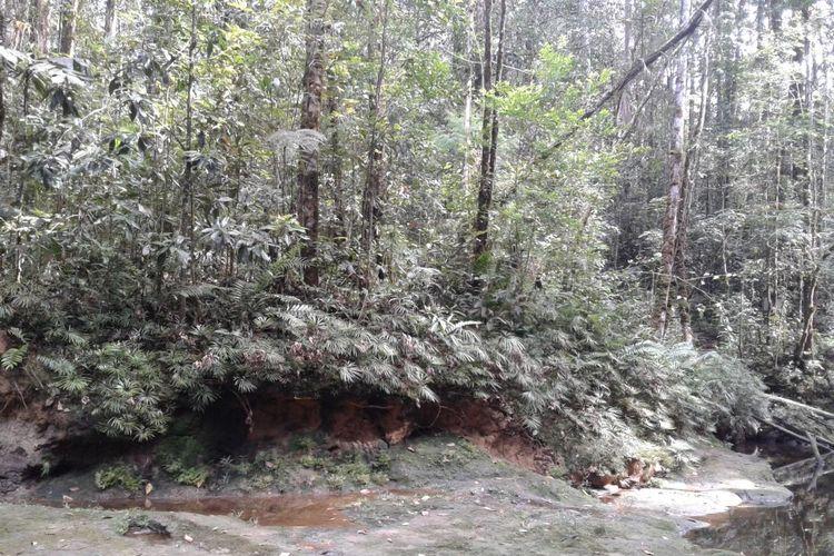 Penampakan hutan Harangan Tapanuli yang merupakan bagian dari Ekosistem Batang Toru, Tapanuli.