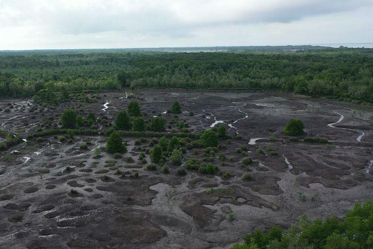 Mangrove di Desa Ligayu, Kalimantan Utara.