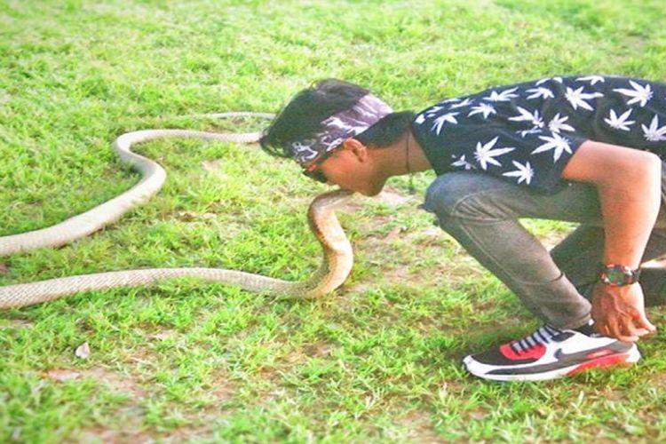 Foto Rizky sedang bermain dengan ular king cobra saat Car Free Day (CFD) di Bundaran Besar Palangkaraya, Minggu (8/7/2018).