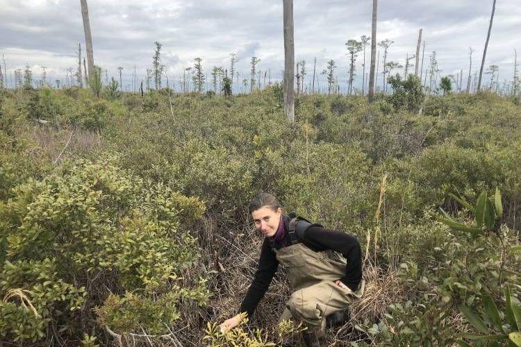 Peneliti Emily Ury dari Duke University berada di hutan hantu di Carolina Utara.