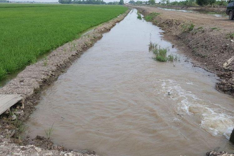 Meluapnya Sungai Pelokan merendam 60 hektar sawah di Desa Rawa Mulya Kecamatan XIV Koto Kabupaten Mukomuko, akibat diguyur hujan dua hari berturut-turut.