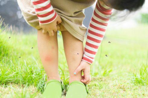 5 Trik Efektif Usir Nyamuk Saat Musim Hujan