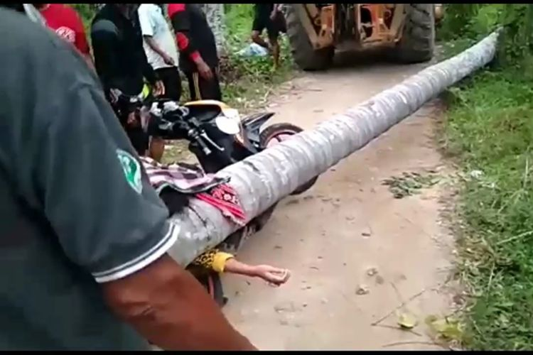 Seorang wanita pengendara motor tewas tertimpa pohon kelapa yang tumbang di Polewali Mandar, Selasa (19/11/2019).