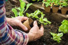 Perhatikan 3 Hal Ini agar Tak Gagal Berkebun di Rumah