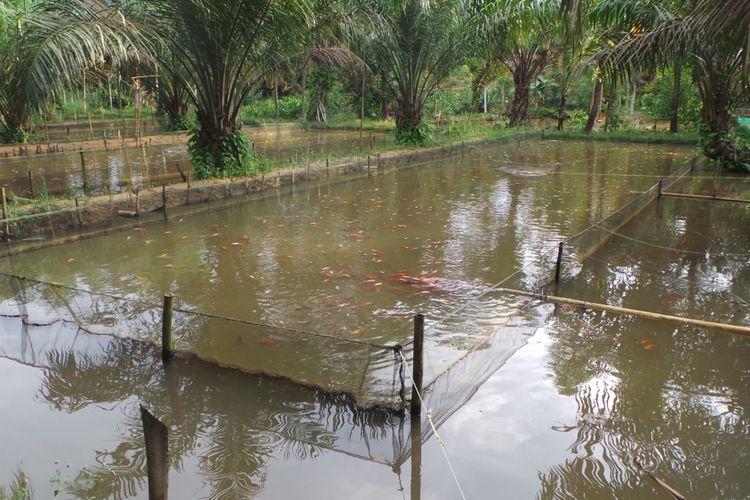 Tambak ikan nila Karang Taruna Laskar Nusantara di Jambi dengan modal awal bibit ikan 30.000 ekor. Melaluinya, masyarakat Jambi diajak untuk beralih kegiatan membuka lahan dengan membakar hutan.