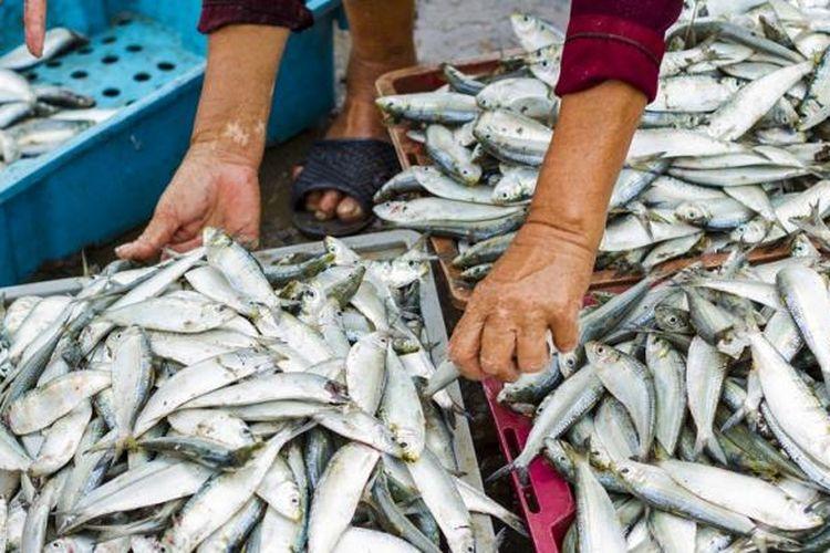 Ilustrasi ekspor ikan