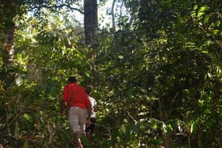 Berjalan menuju Hutan Suka di Kabupaten Manggarai Timur, Nusa tenggara Timur.