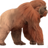 Gigantopithecus, Kera Besar Serupa Bigfoot