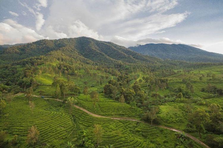 Ilustrasi pemandangan kawasan Puncak, Bogor.