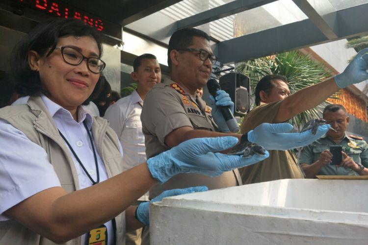 Jajaran Subdit Sumber Daya Lingkungan (Sumdaling) Ditreskrimsus Polda Metro Jaya baru saja menangkap ES, seorang tersangka kasus jual beli kura-kura jenis moncong babi asal Kabupaten Merauke, Papua.