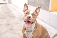 Seekor Anjing Ditemukan di Jalan dengan Luka Parang di Kepala