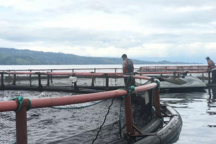 Keramba Jaring Apung milik PT Suri Tani Pemuka (STP) di Tambun Raya, Danau Toba.