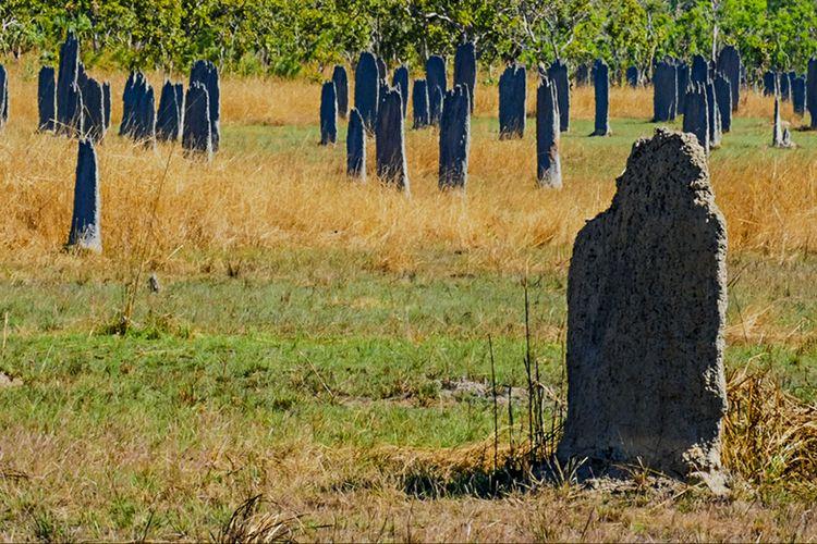 Gundukan Rayap yang Sekilas Mirip Batu Nisan di Magnetic Termite Mounds, Australia.
