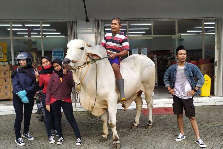 Sapi milik Feri Cahyo Nugroho (27) warga Dusun Singolangu, Kelurahan Sarangan, yang sempat viral karena bisa dinaiki untuk belanja ke mini market terjual seharg a Rp 85 juta.