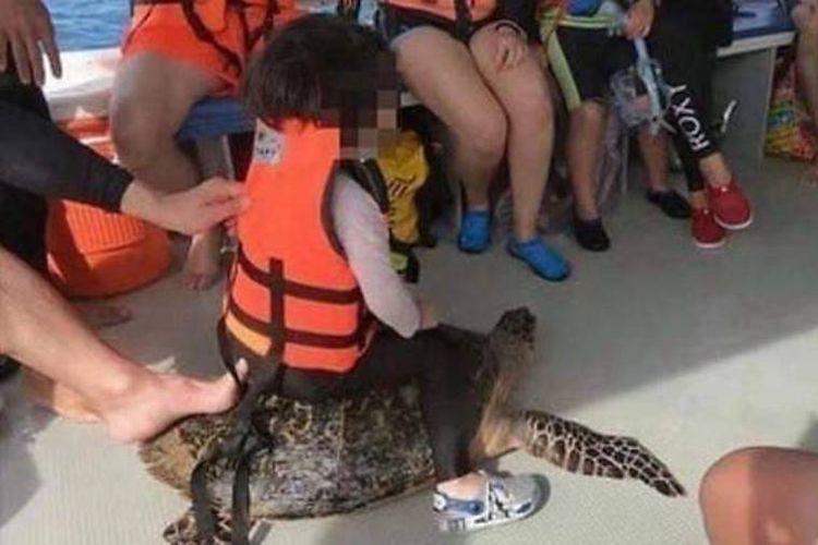 Foto seorang anak perempuan yang menaiki seekor penyu laut yang menjadi viral di media sosial di Malaysia.