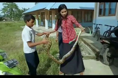 Siswanya Terancam, Guru Wanita Tangkap Ular Piton dengan Tangan Kosong