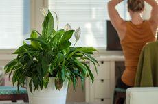 Mengapa Penting Meletakkan Tanaman di Dalam Rumah? Ini Alasannya