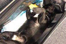 Berita Populer: Kematian Anjing di Pesawat hingga Pemecatan Menlu AS