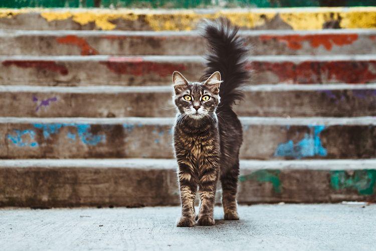 Ilustrasi kucing ketakutan