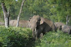 Gajah dan Badak Terancam Punah, Inilah Peran Mereka bagi Bumi