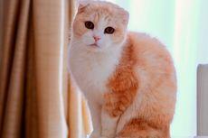 Penyebab Kucing Sering Bersin