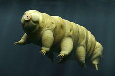 Ilmuwan Berhasil Menghidupkan Hewan yang Dibekukan 30 Tahun Lalu