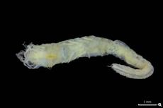 Ahli Skotlandia Temukan Spesies Baru Cacing Laut, Punya Mata di Pantat