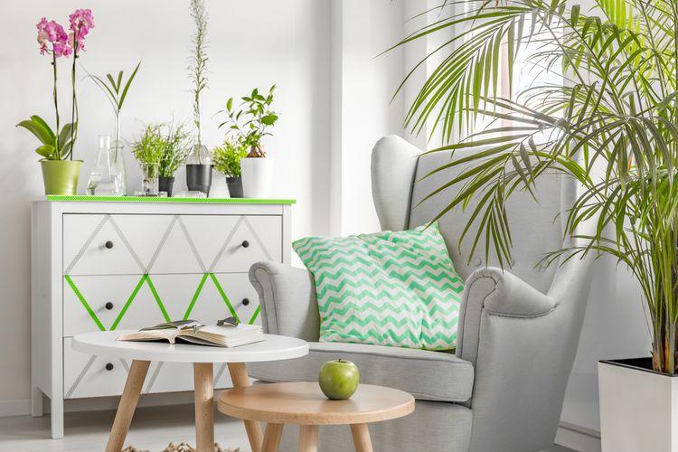 Ilustrasi tanaman hias di dalam ruangan.