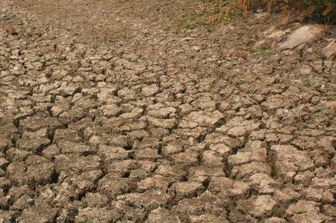 Indramayu Terancam Kekeringan Ekstrem, 60 Hari Tak Turun Hujan