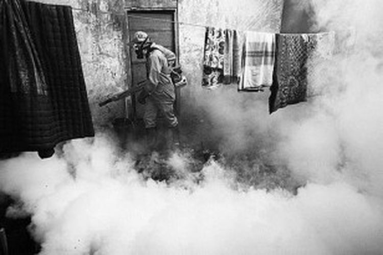Pekerja melakukan pengasapan untuk mencegah penyakit demam berdarah dengue