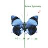 Konsep dan Contoh Soal Transformasi pada Refleksi (Pencerminan)