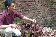 Cium Bau Busuk di Pekarangan Tetangga, Ini yang Ditemukan Warga Purwokerto