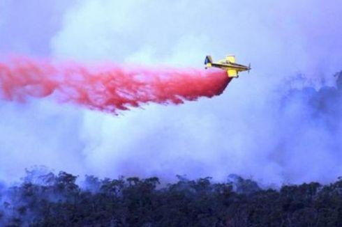 Kalimantan dan Sumatera, Ukuran Sorotan Dunia ke Indonesia soal Lingkungan Hidup