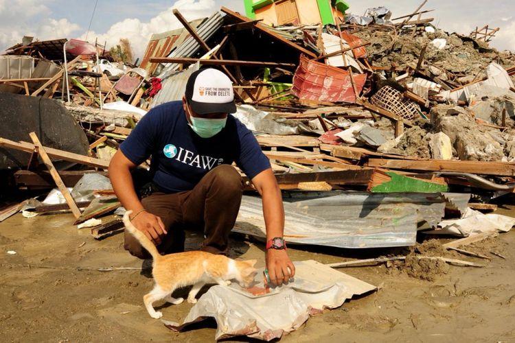 Salah satu tim Animals Warrior memberi makan kepada kucing yang berada di daerah terdampak bencana di Palu.