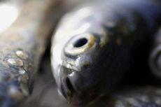 Ikan Bandeng, Bukan Makanan Khas Imlek Warga Palembang