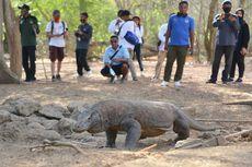 Peneliti LIPI: Proyek Jurassic Park di Rinca Tak Bahayakan Habitat Komodo