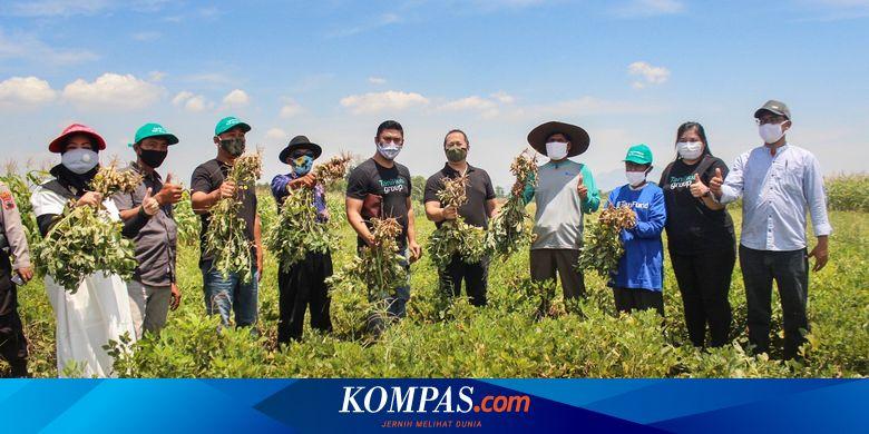 GOOD Hasil Produksi Petani Kacang Mitra TaniHub Bakal Diserap Garudafood