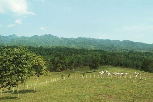 Bukit Waruwangi, Tempat Wisata di Serang dengan Pemandangan ala Eropa