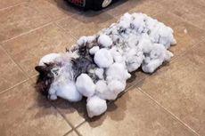 Suhu Ekstrem Polar Vortex di Amerika Bikin Kucing Ini Hampir Mati Beku