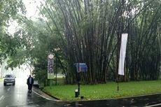 Pelesir ke Kebun Raya Bogor, Lihat Tanaman-tanaman Serba Raksasa Ini!