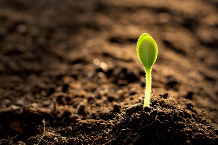 Ilustrasi nitrogen diperlukan tumbuhan untuk tumbuh dan berfotosintesis. Bagi manusia dan hewan, nitrogen juga sangat penting. Melalui siklus nitrogen, molekul ini baru bisa terserap, baik oleh tumbuhan, hewan maupun manusia.