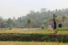 Musim Kemarau 2020 Mundur di Sebagian Wilayah Indonesia, Ini Daftarnya
